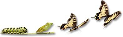 Het IMSUS TRUST-model: van rups tot vlinder